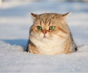 Ten Amazing Pictures of Cats Playing in the Snow