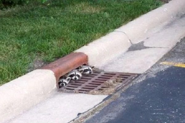 Ten Lovable Animals in Drains That Need a New Home