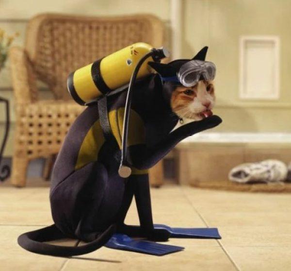 Navy Cat