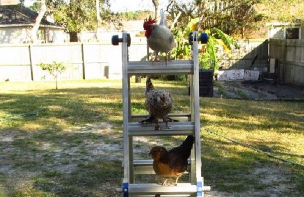 Ten Animals on Ladders Doing a Little Bit of DIY