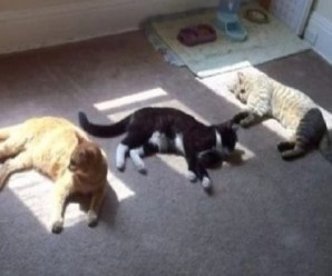 Ten Summer Cats Enjoying and Hiding From the Summer Sun