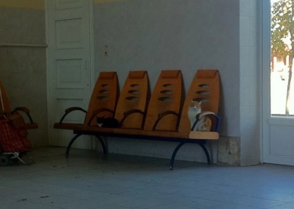 Cat waiting on a chair