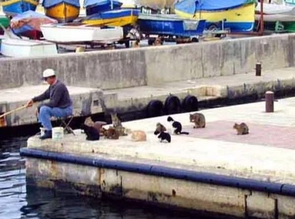 Cats waiting for the fisherman to catch something