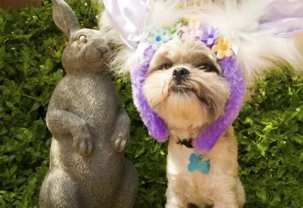 Dog Dressed as the Easter Bunny