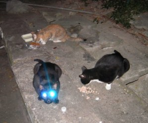 Top 10 Best Images of Laser Eyed Cats