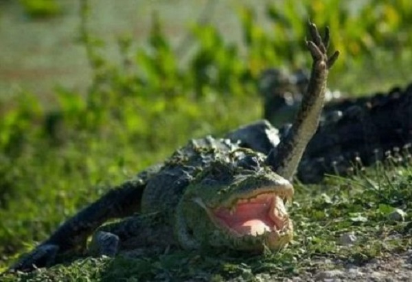 Ten Animals Waving Who Just Want to Say Hello or Goodbye