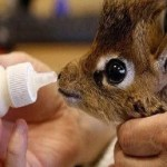Ten Cute Animals Being Bottle Fed You Will Smile at
