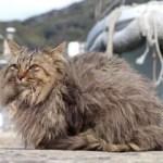 Ten Great Photos of the Fascinating Cats of Tashirojima Island
