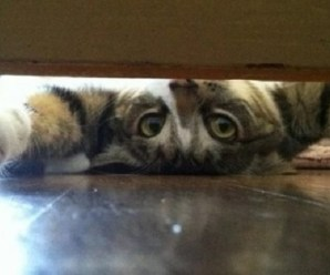 Ten Upside Down Cats Who Don't Know Which Way Is Up!