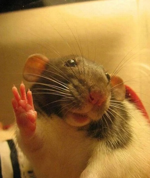 Mouse Waving Hello
