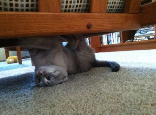 Upside Down Cat