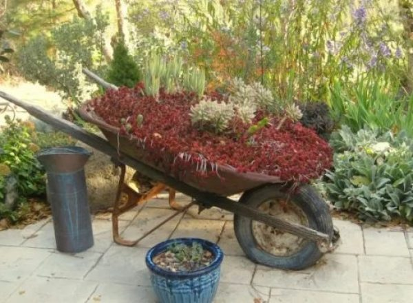 Wheelbarrow turned into a Planter