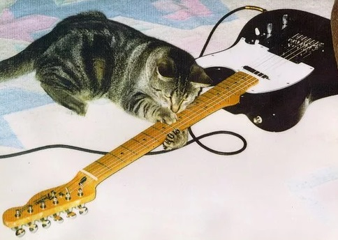 Cat playing bass guitar