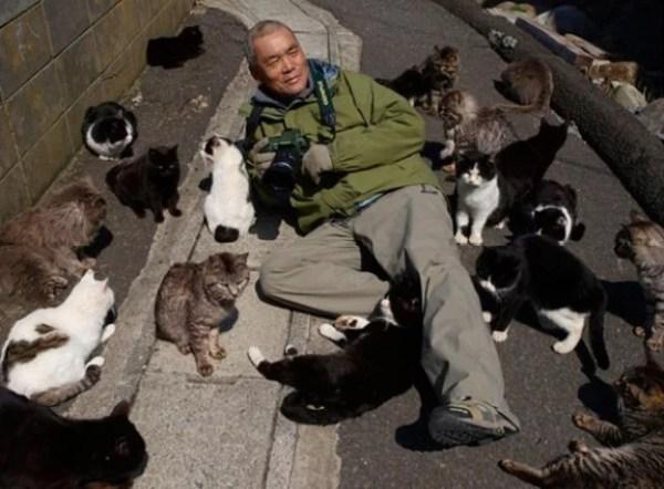 Cats of Cat Island