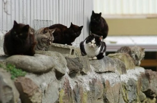 Cats of Cat Island