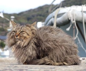 Top 10 Images of the Cats of Tashirojima Island