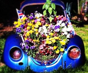 Top 10 Best Volkswagen Beetles in Gardens
