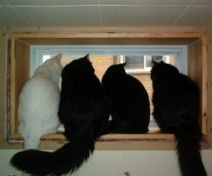 Top 10 Images of Cats Looking out of Windows