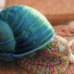 Ten Amazing and Funny Images of Snails You'll Smile at