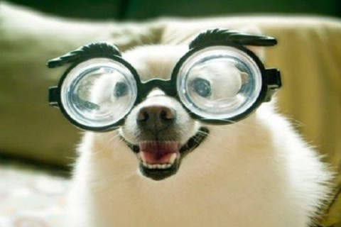 Ten Animals That Did End Up Going to Spec Savers!