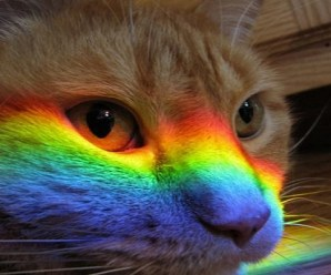 Ten Beautiful Photos of Rainbow Cats That Are Full of Colour