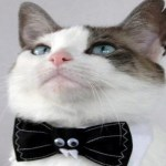 Ten Cats Wearing Bow Ties Who Look Smarter Than You