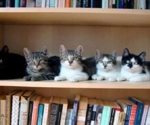 Ten Cats on Bookshelves Filling Up Empty Spaces