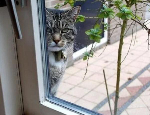 Creepy Cat Looking Through Window