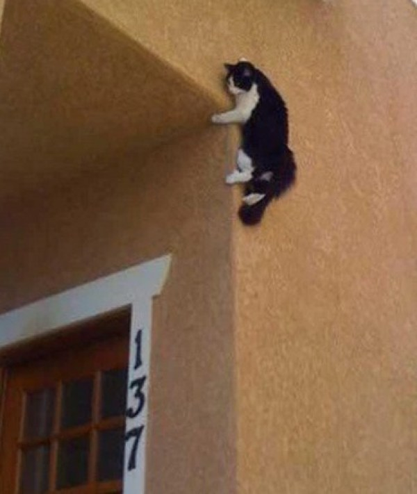 Creepy Cat Climbing a Wall Ready to Attack