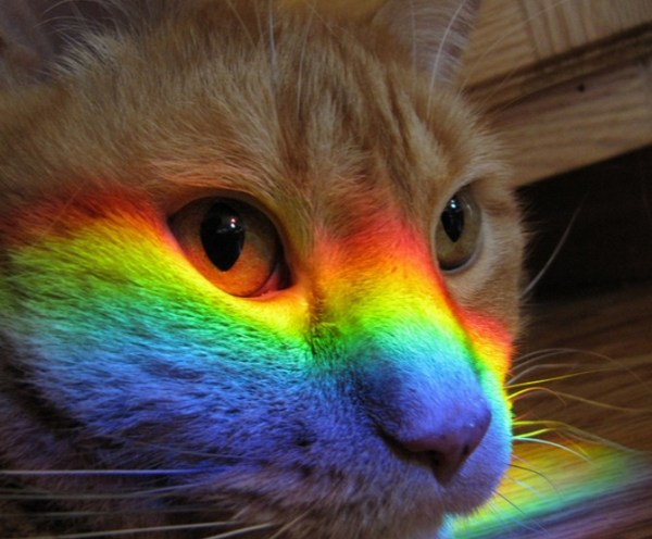 Rainbow Cat