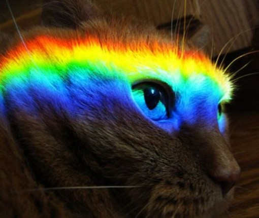 top 10 best images of rainbow cats