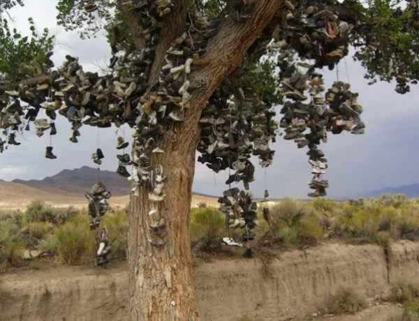 Shoe Tossing: Thousands of Shoes on a Tree