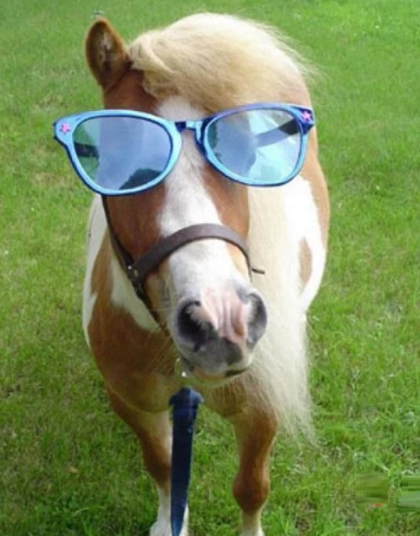 Horse Wearing Glasses