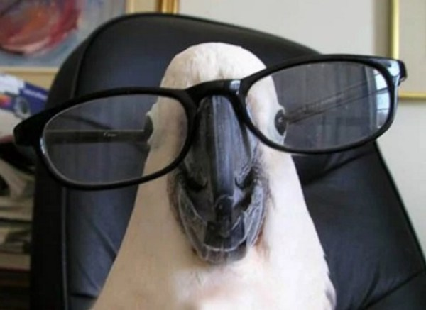 Parrot Wearing Glasses