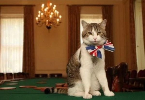 Cat Wearing a Union Jack Bow Tie