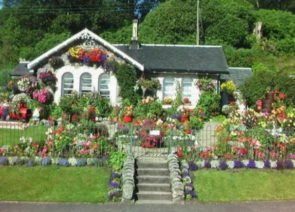 House covered in flowers