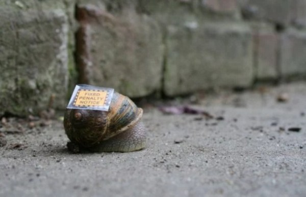 Snail with Parking Ticket