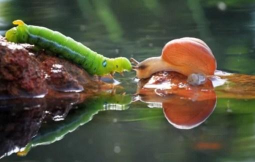 Caterpillar Rescuing Snail