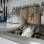Ten Cats in Sinks Who Treat Sinks Like Their Beds