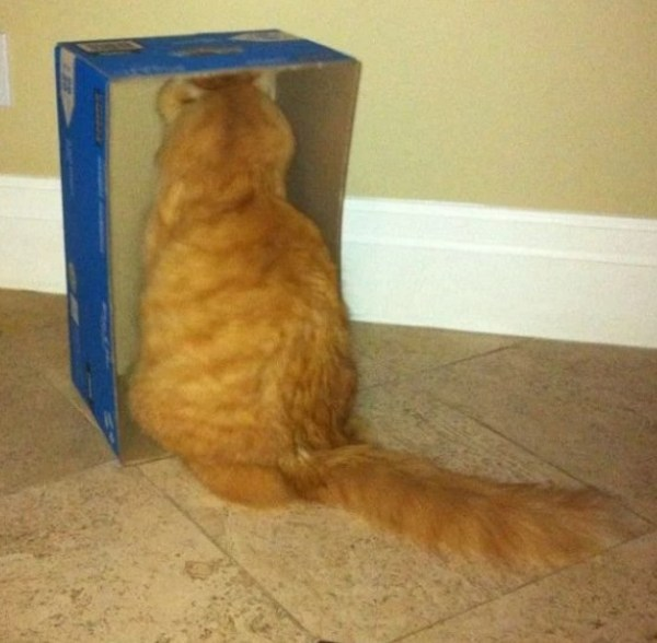 Strange Cat Staring Into a Box