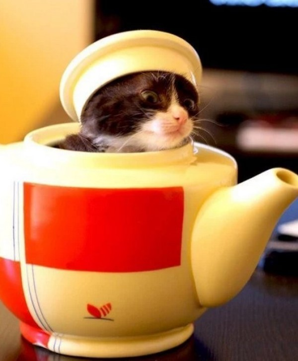 Cat Disguised as a teapot