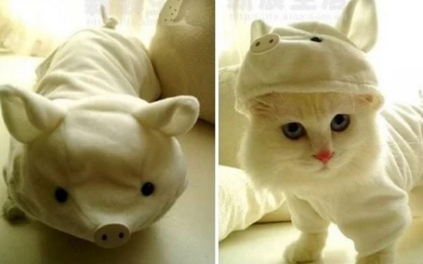 Cat Disguised as a pig