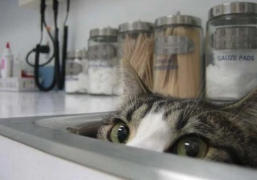 Cat Hiding in a Sink