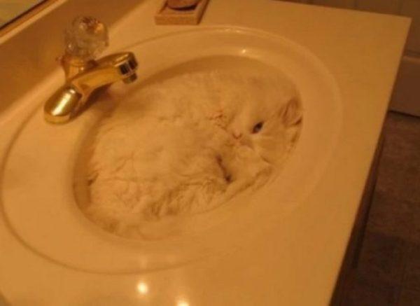 White Cat Asleep in Sink