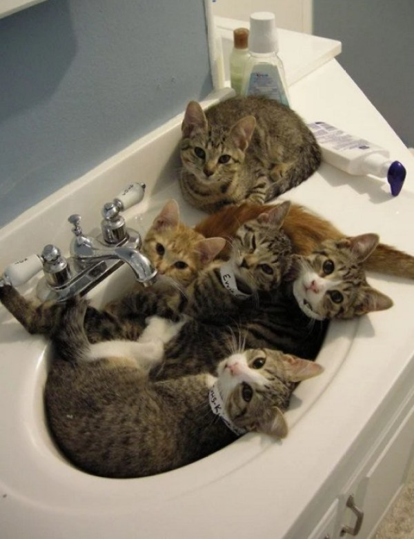5 Cats in a Sink