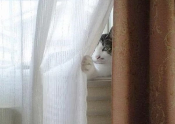 Cat hiding behind net curtain