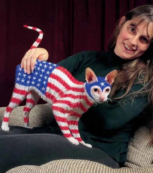 Cat painted to look like the American Flag