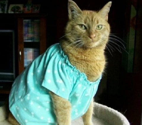 Ten Cats in Pyjamas Who Are Ready for Their Bed Times
