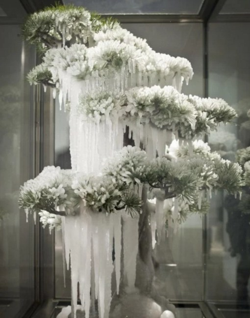 Bonsai Tree Covered in Ice