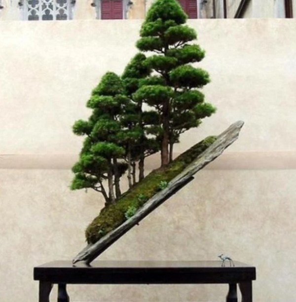 Bonsai Trees Grown on Slanted Rock